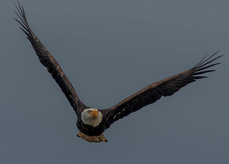 New Year's Eve Eagle