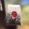 .79ctw Oval Padparadscha Sapphire Bezel Stud Earrings 32