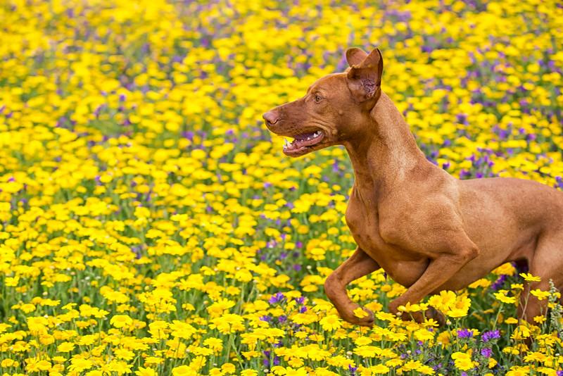 Dogs_Mango_Cornwall_2014_FH0T7736.jpg