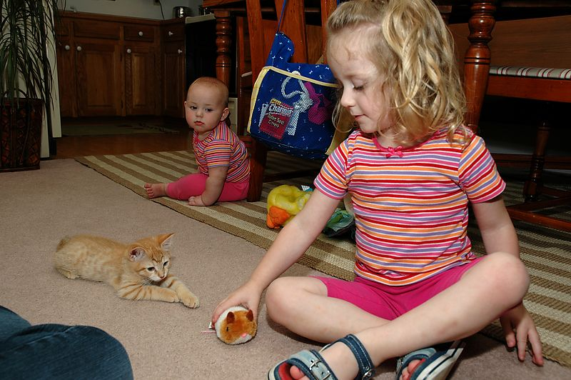 Mary, Lily, and Oliver play with the hamster toy.