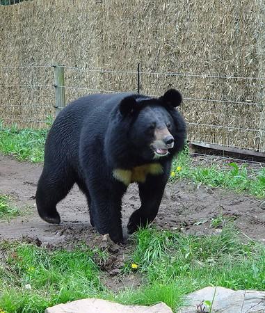 Bears & Kin