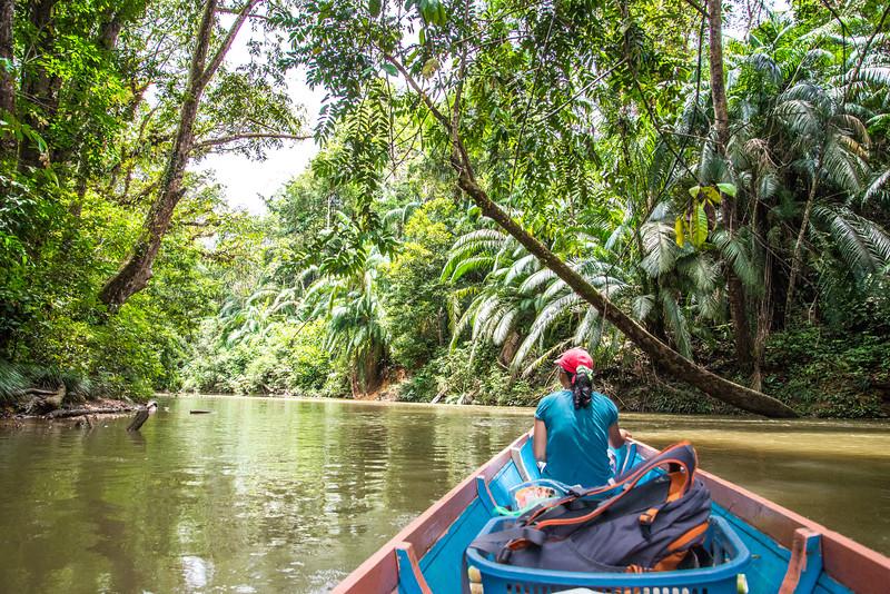 On the River Near Nanga Sumpa