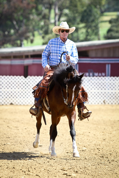 Arabian Open Ranch Riding