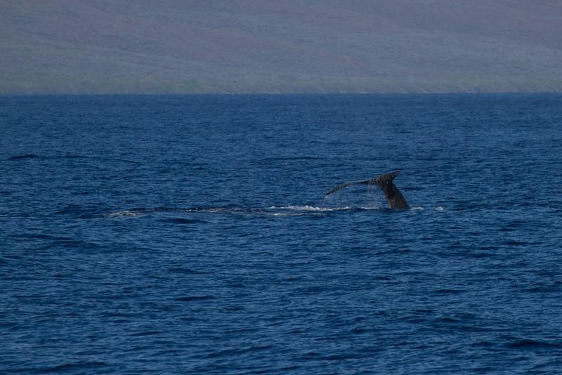 Hawaii2012-992.jpg