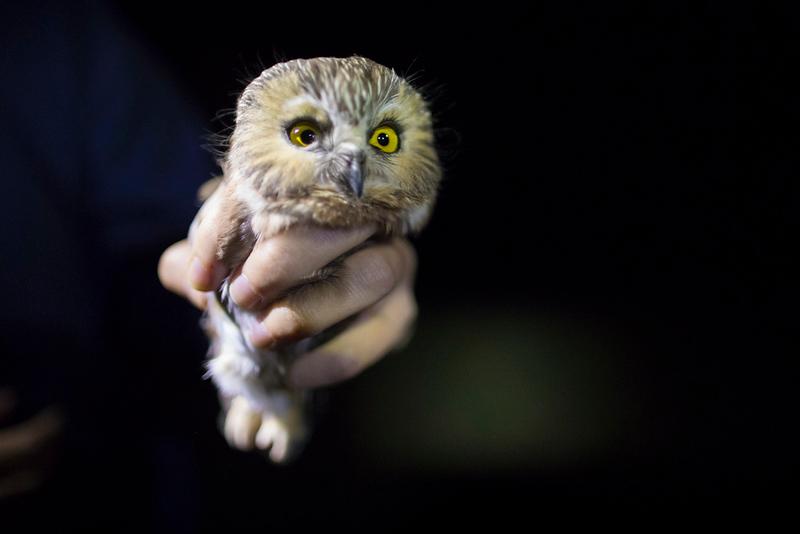 CIK-181012-Owls-API_6495.jpg