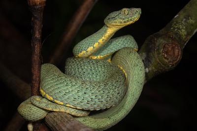 Peruvian Amazon 2019