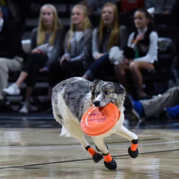 Frisbee dogs 2016-25.jpg