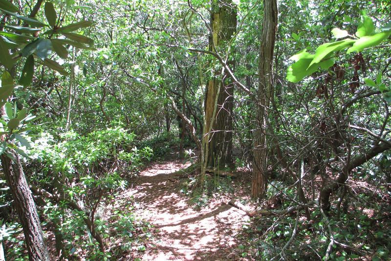Bynum Bluff Trail