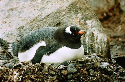 Antarctica 93 - part 1