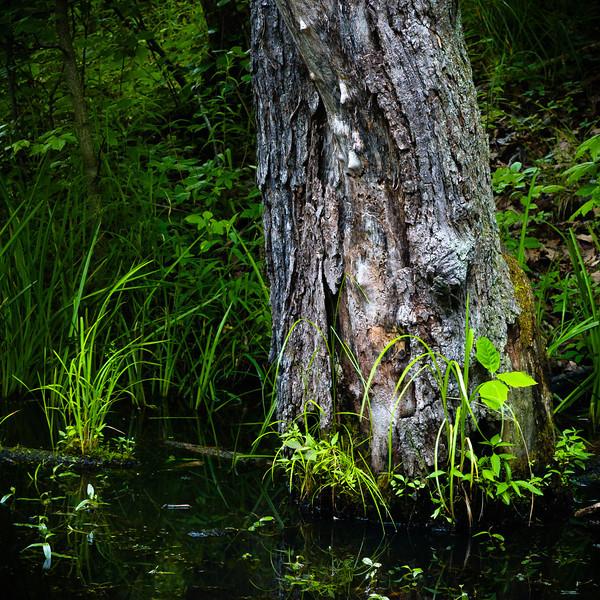 20100613_beyers_pond_134.jpg