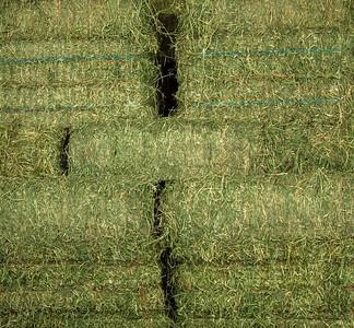 Premium Alfalfa 2