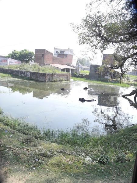 india2011 725.jpg