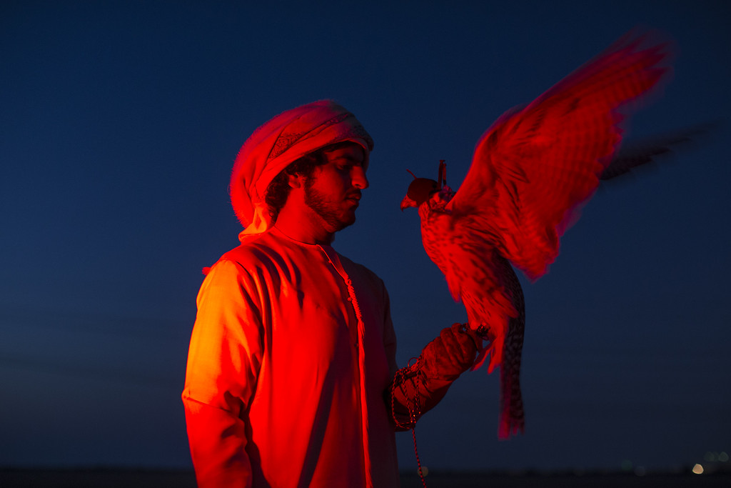 . Saif Al Kendi is illuminated by brakes lights with his Saker Falcon on February 3, 2015 in Abu Dhabi, United Arab Emirates. Traditionally a way of obtaining food, Falconry today has become more of a national sport and a rite of passage for many young Emirati men, who take their time to train their Falcons, developing a relationship and deep bond with the birds. Groups of friends regularly come together in the evenings to meet and train their birds where the practice becomes more about camaraderie and sharing knowledge than subsistence. The practice of Falconry was recognized by UNESCO in 2012 under the \'Intangible Cultural Heritage of Humanity\' list. The national emblem of the United Arab Emirates is comprised of a golden Falcon holding onto a red parchment, which depicts the name of the country.  (Photo by Dan Kitwood/Getty Images)