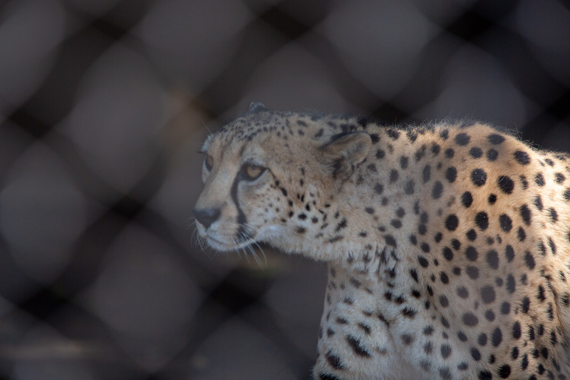 SD Zoo 3.20-161.jpg