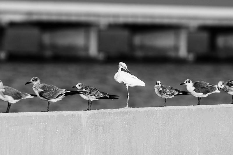 Skyway bridge birds-2.jpg