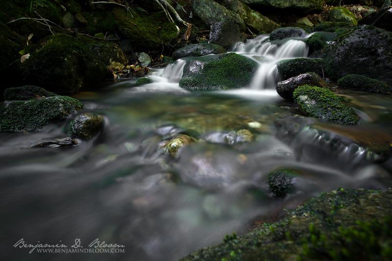 Green Forrest Stream