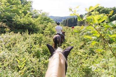 Virginia Horses