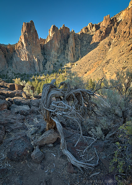 Juniper remains - Smith Rock state park in central Oregon