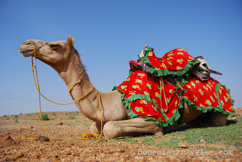 camel restng before trek.jpg