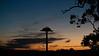 Venus,Jupiter, osprey nest silhouette after sunset.