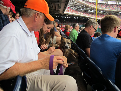 Pups in the Park (Nats vs. Braves - 06/22/14)