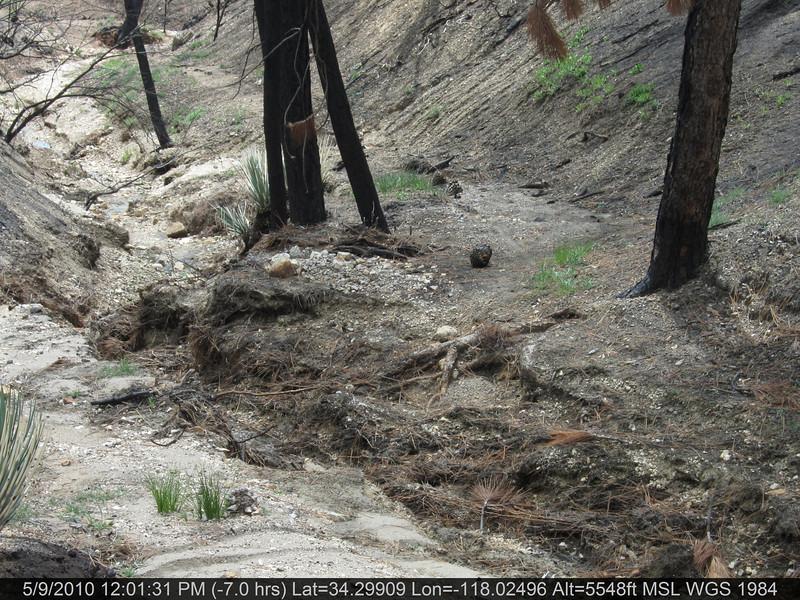 081-Vetter mtn Trail.JPG