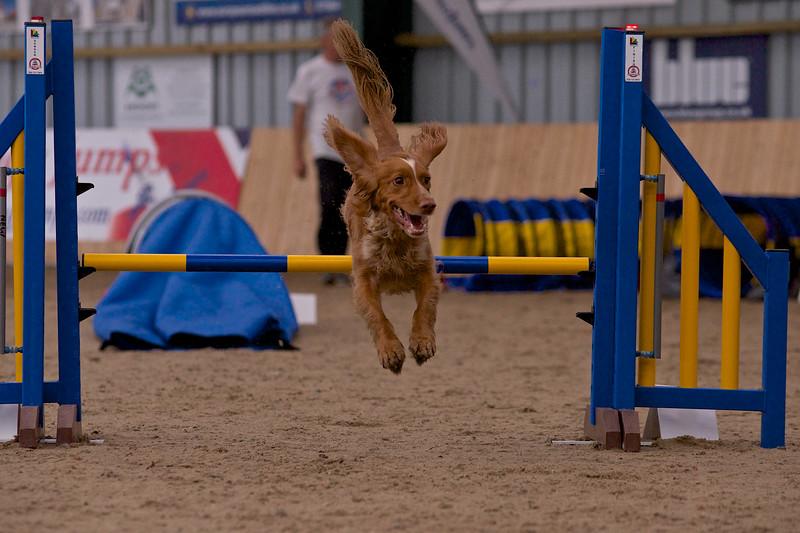small dog final 1257.jpg