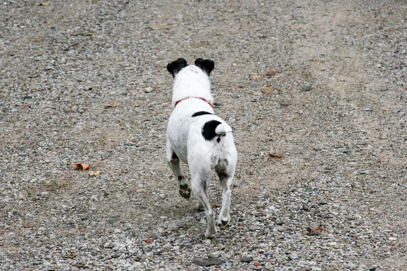 farley pups 002-2 (1).jpg