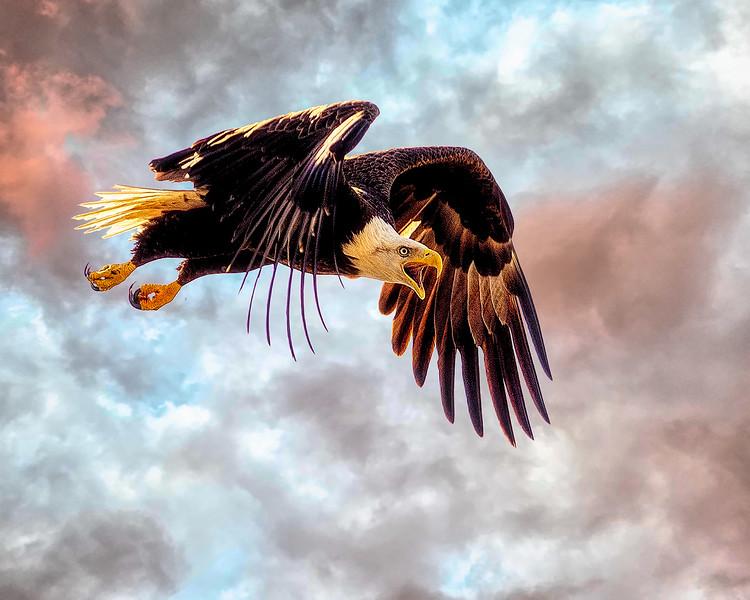 Eagle2_DSC9289-copy.jpg