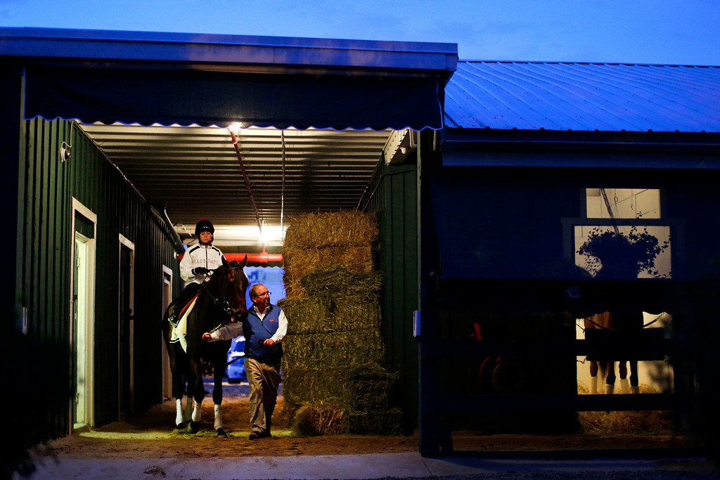 . Trainer Shug McGaughey leads Kentucky Derby winner Orb, with exercise rider Jennifer Patterson aboard, out of a barn at Pimlico Race Course in Baltimore, Saturday, May 18, 2013, for a workout on the morning of the 138th running of the Preakness Stakes horse race. (AP Photo/Patrick Semansky)