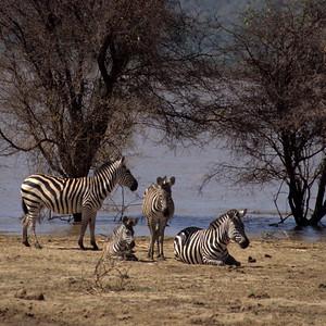 1999 - Tanzania
