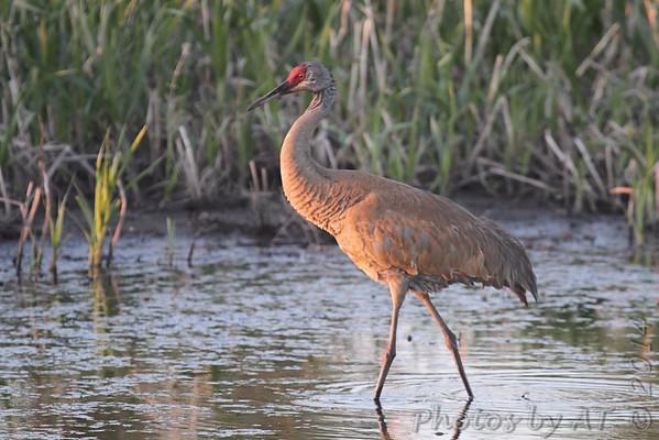 2014-05-15 Squaw Creek NWR
