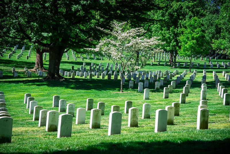 Arlington-131.jpg