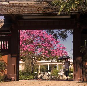 Balboa Park Japanese Friendship Garden in Bloom