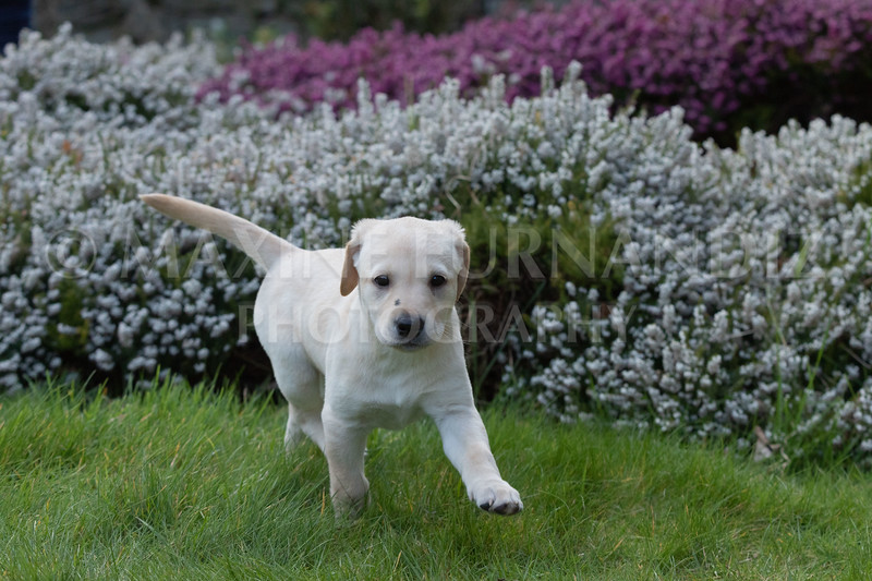 Weika Puppies 24 March 2019-6308.jpg