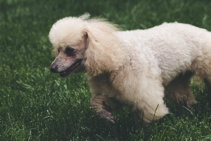 opal mike dogs (1 of 1)-114.jpg