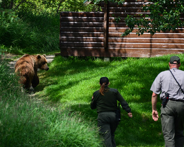 Bears of Katami National Park