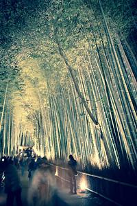 The Grove at Tenryuji