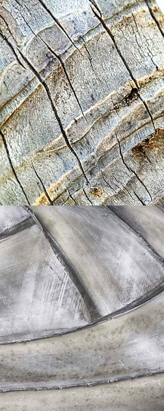 light - BARK - NEUTRAL014.jpg
