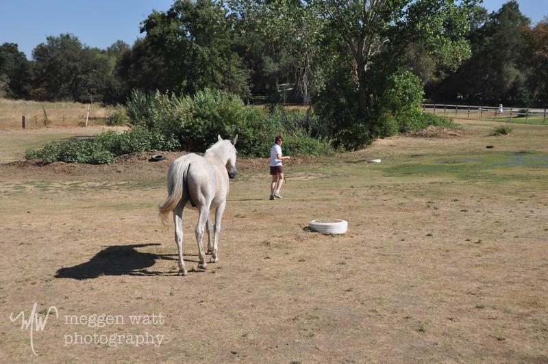 EB&Horses-081.jpg
