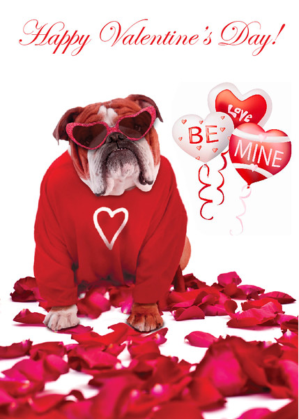 Teddy Valentines Day 2