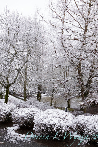 Aesculus pavia - Spirea 'Lime Mound' in snow_4239.jpg
