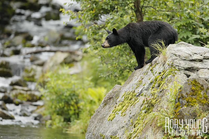 BearPose2.jpg