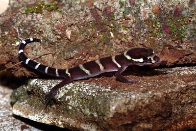 Costa Rica (Guanacaste)