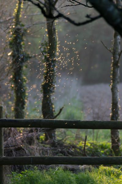 Flies in Ballywilliam