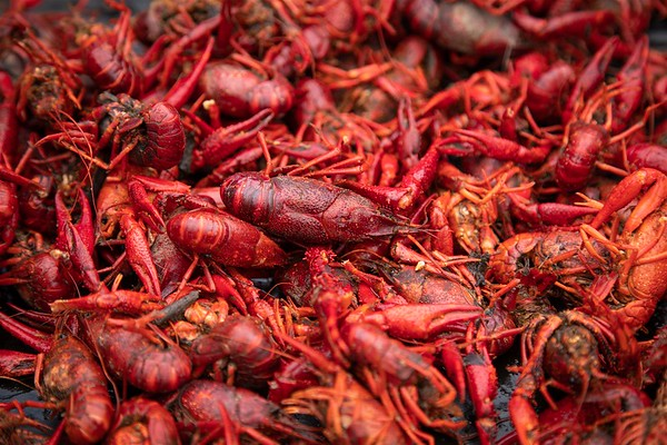 Crawfish Party 2018