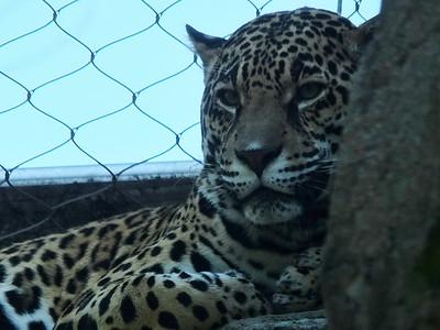 Senior Safari at Happy Hollow Zoo