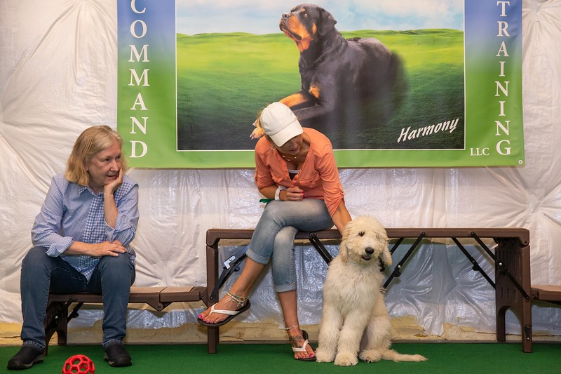 on Command dog Training June 2019-5215.jpg