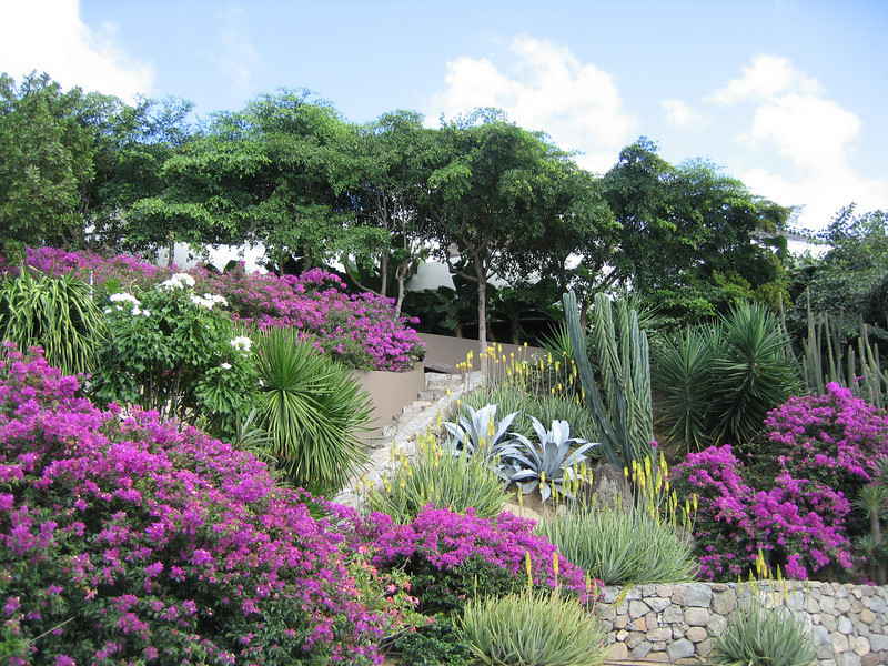 Saint Barth - Flora
