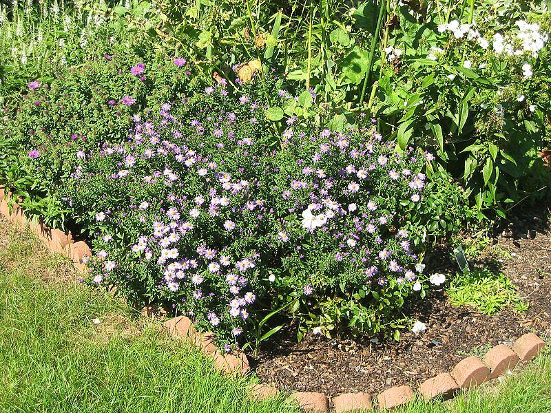 garden-2005-09-0381_std.jpg